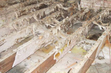 Thanet Timber & Damp - Dry Rot